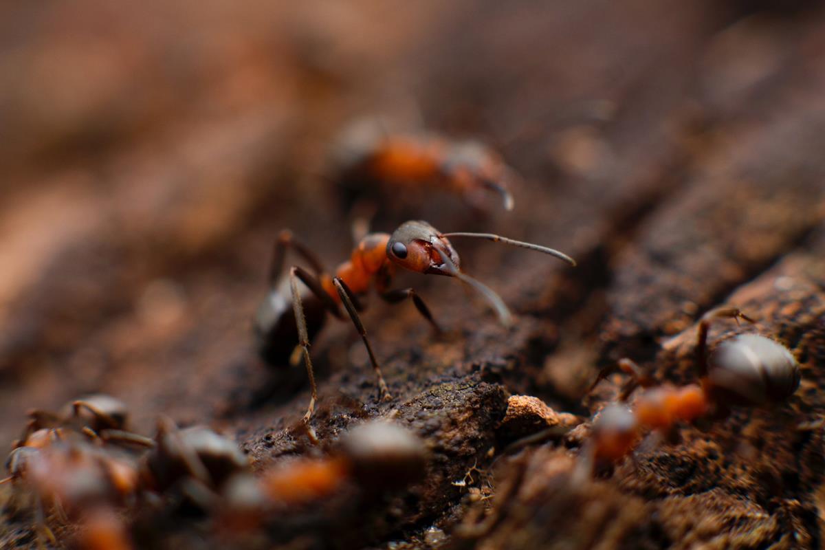Jak wytępić szkodliwe owady