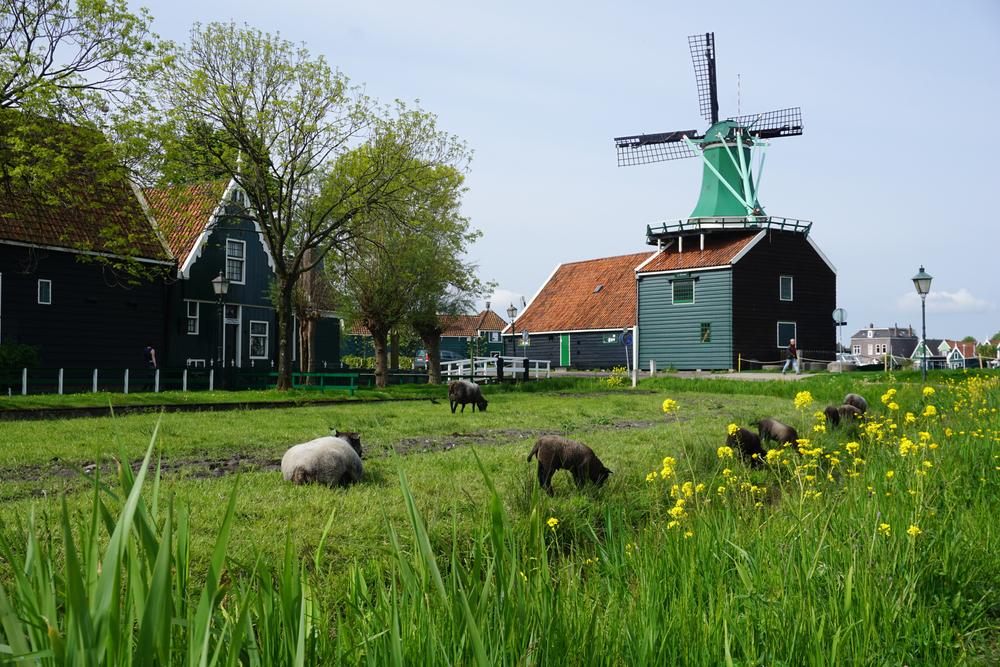 Praca w Holandii – dlaczego nie warto jechać na własną rękę (a lepiej z agencją pracy)
