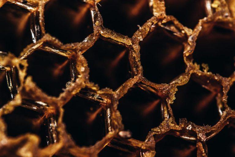 Jak powstaje miód? Poznaj magiczny proces powstawania produktów pszczelich.