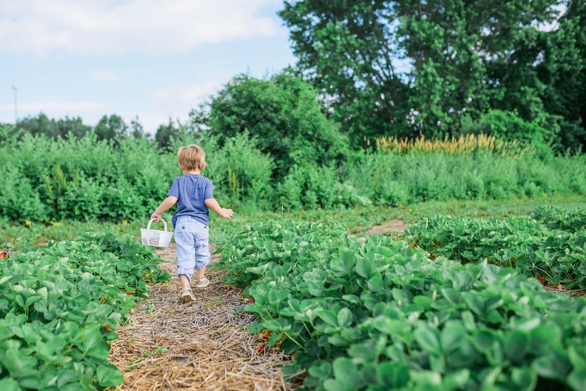 Jak znaleźć odpowiednie środki ochrony roślin?