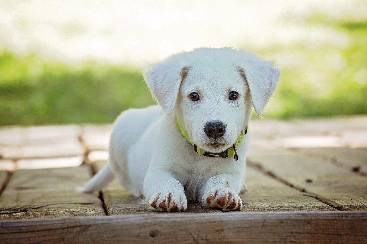 Adopcja psa – jak odpowiedzialnie podejść do tematu